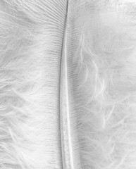 Close-up of a white feather