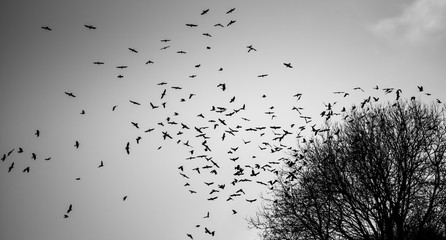 A flock of birds rising from a tree.