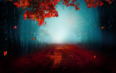 Fantasy background . Magic forest.Beautiful autumn landscape.