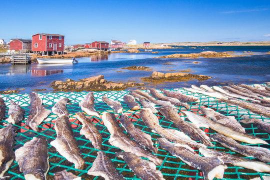 The fishing village of Joe Batt's Arm, Fogo Island, Newfoundland and Labrador, Canada