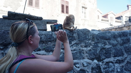 Tourist takes pictures on a smartphone, licking a red cat on the background of the ancient buildings of the old city