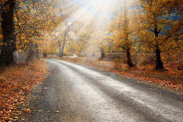 Aluminium Prints Autumn Landscape image of dirt countryside dirt road with colorful autumn leaves and trees in forest of Mersin, Turkey