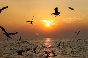 Foto auf Leinwand Rosa hell birds in flight