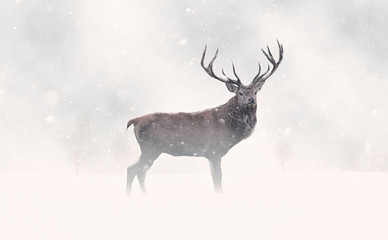 Photo sur Aluminium Cerf Deer Stag in Snow