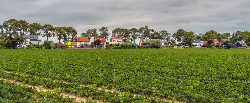 Large field with organically grown celery plants in long rows