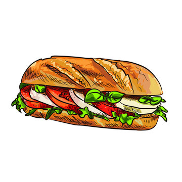 Hand drawn Sketch illustration converted to vector, european sandwich with mozzarella tomatoes and basil.