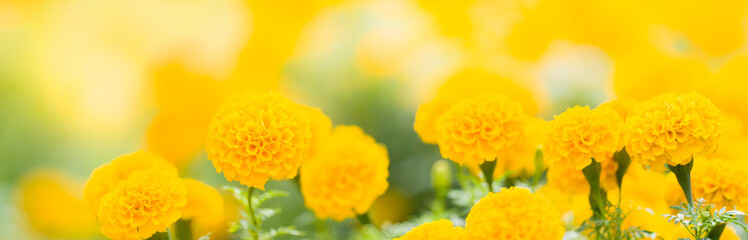Closeup nature view of yellow flower on blurred greenery background in garden with copy space using as background natural green plants landscape, fresh cover page concept.