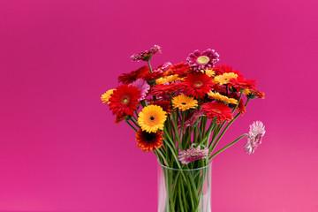 Foto op Aluminium Struisvogel Gerbera, rot, pink, Blume, Pflanze, isoliert, Strauß, bunt, orange, Strauss, Textraum, Blumen, Freiraum, Hintergrund, Blumenstrauß, Asternartige, Korbblütler