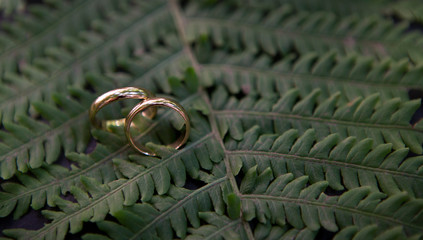 Close up of wedding rings pair on spruce branches