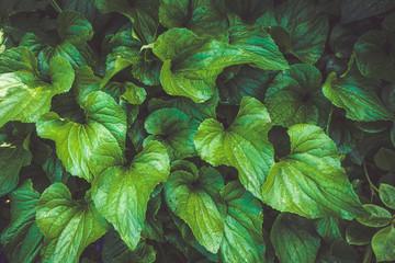grüne Blätter Wall mural