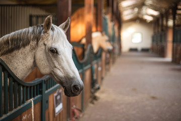 Spoed Foto op Canvas Paarden A pony's head over the loosebox gate in the stable