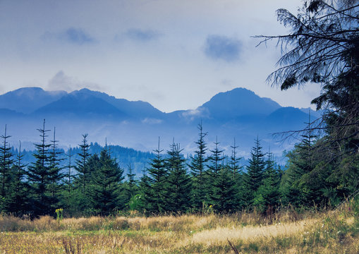 Coastal Range and Pine Trees near Manzanita, Oregon