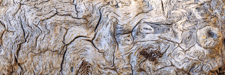 Burl Side of An Oak Stump