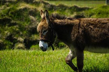 Fototapeten Esel Donkey