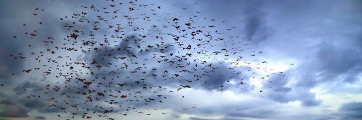 large group of flying bats, mega bats in the sky