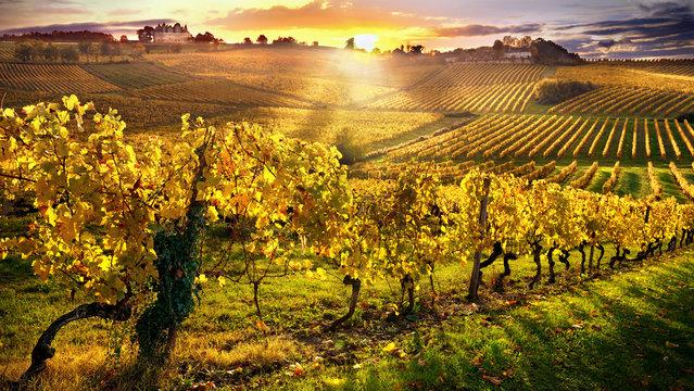 vineyards bergerac france