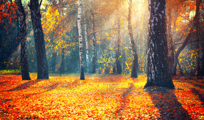 Wall Mural - Autumn. Fall. Autumnal park. trees and colorful leaves in sun rays. Beautiful autumn nature scene background