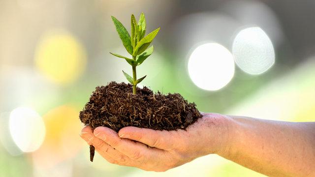 Klimaschutz. Bäume pflanzen gegen den Klimawandel