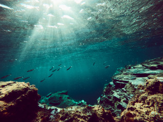Underwater photo of tropical reef with sea life