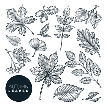 Autumn forest plants and leaves set, isolated on white background. Vector hand drawn sketch illustration
