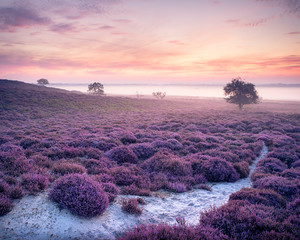 Pink Roydon