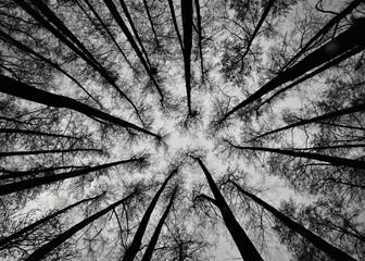 czarno białe drzewa