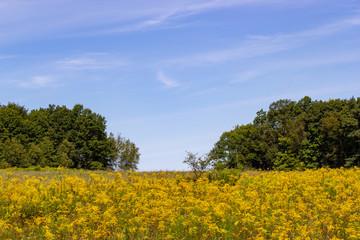 Blue Sky Yellow Field