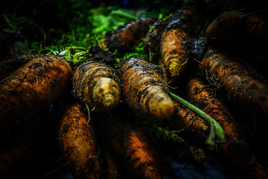Close up of carrots covered in dirt