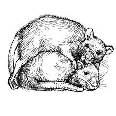 Sketch two rats. Couple of rats. Realistic ink engraved rat, mouse. New 2020 Year Symbol