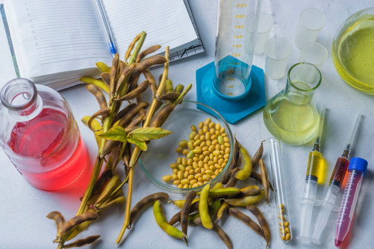 Soybean, laboratory research, syringe, soybean pods and test tubes on a table with a notebook for writing.