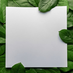 Creative layout made of green leaves with paper card note. Flat lay. Nature concept.