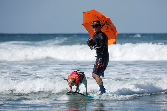 """A man and his dog ride a wave together as they compete in the 14th annual Helen Woodward Animal Center """"Surf-A-Thon"""" where  more than 70 dogs competed in five different weight classes for """"Top Surf Dog 2019"""" in Del Mar, California"""