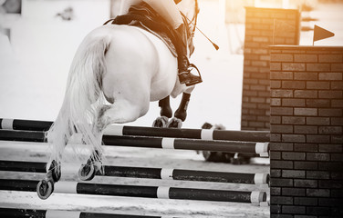 The gray horse overcomes an obstacle.Show jumping