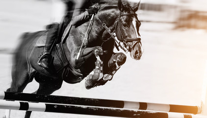 The horse overcomes an obstacle.Show jumping