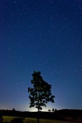 Starry night sky with tree in horizon