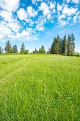 Zartgrüne Bergwiese im Allgäu im Frühjahr