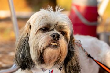 dogs cães cachorros