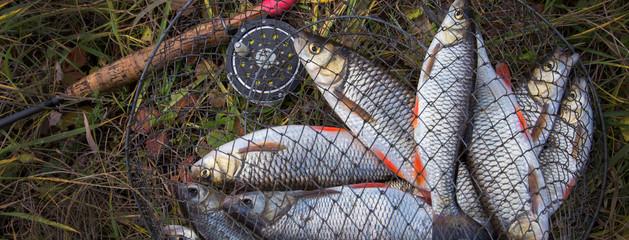 fish in mesh bag.