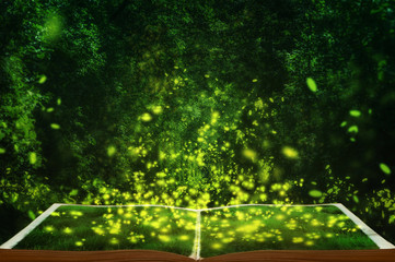 open fairytale magic book. Fireflies in the wild forest. famous romantic place called Tunnel of Love, Klevan, Ukraine. natural summer (spring) background (collage) Wall mural