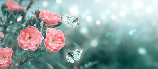 Mysterious spring floral banner with blooming rose flowers and flying butterflies on blurred background in soft pastel colors and shiny glowing bokeh