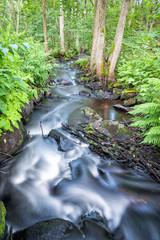 Small Swedish brook in summer scenery