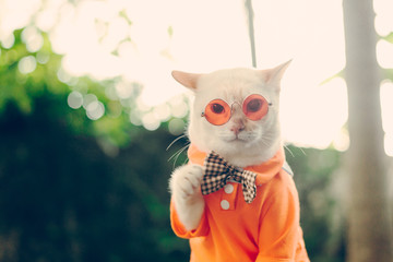 Portrait of Hipster White Cat wearing sunglasses  and shirt,animal  fashion concept.