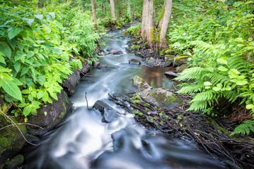 Small Swedish brook in forest