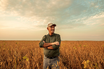 Senior farmer standing in soybean field examining crop at sunset. Wall mural