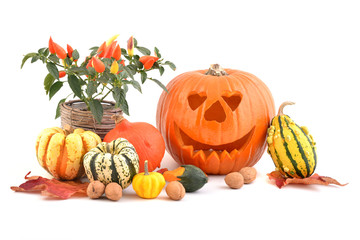 Halloween pumpkin, autumn flowers and colorful leaves on white background.