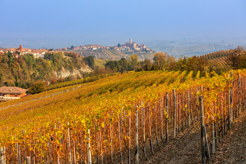 Autumnal vineyards on the hills in Northern Italy.
