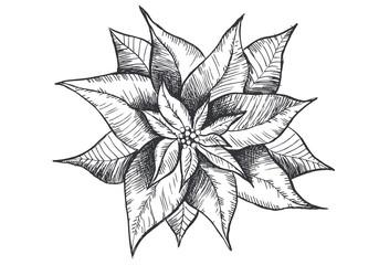 Christmas Star. Hand drawn Poinsettia.