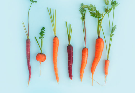 Carrots of different shapes, colors and sizes on a blue background, top view. Diversity concept