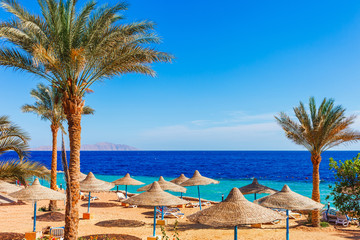 Sunny resort beach with palm tree at the coast shore of Red Sea in Sharm el Sheikh, Sinai, Egypt,...