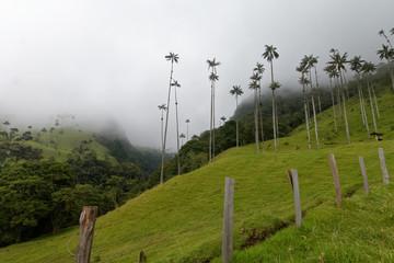 Dolina Cocora (Salento, Kolumbia)
